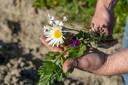 Akkerranden bestaan uit een rijke variëteit aan bloemen en dat is goed voor tal van insecten.
