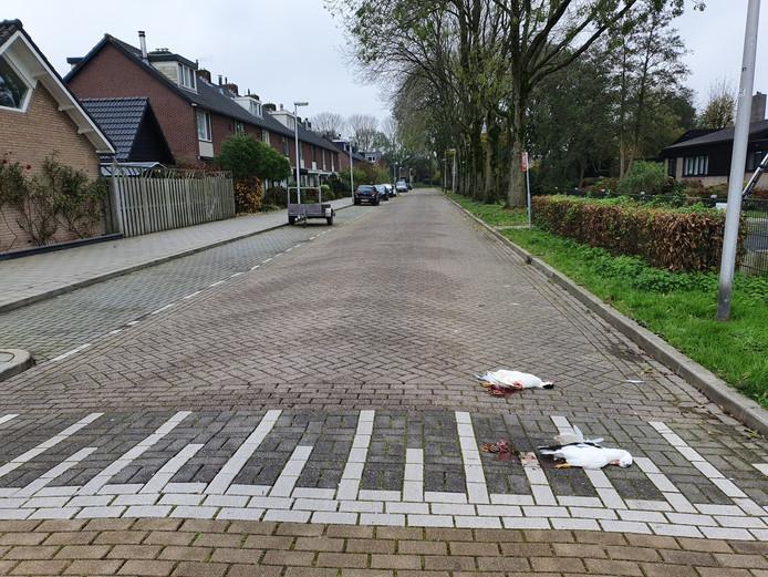De twee doodgereden eenden op de Mozartlaan in Waddinxveen.