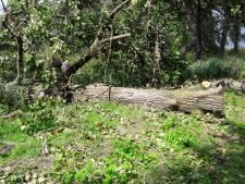 Voetbalvereniging rouwt om Marcel die overleed door vallende boom