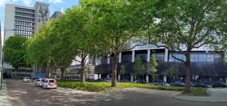 Rechter besluit: 'monumentale' platanen bij Rotterdam Centraal mogen blijven staan