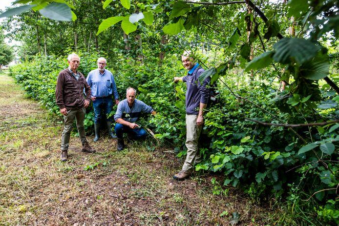 IVN-gidsen tonen de structuur van de vlechtheg. V.l.n.r.: Jan Vermeltfoort, Wim de Vrij, Peer van Bakel en Henri van Weert.
