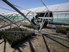Plantjes uit ingestorte kweektunnels van Ergon gaan tóch naar de veiling