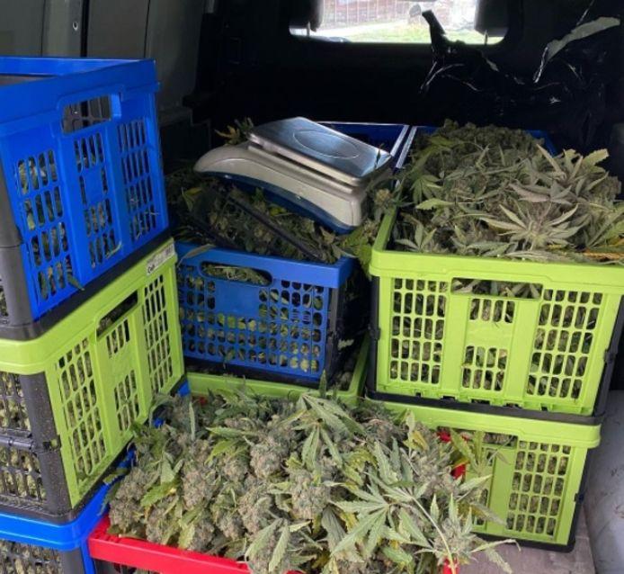 In de hennepknipperij in Casteren lag zo'n 60 kilo hennep.