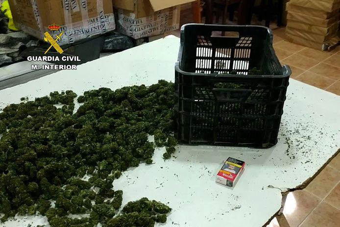 De politie ontdekte 52 plantages in Madrid en andere regio's in het land.