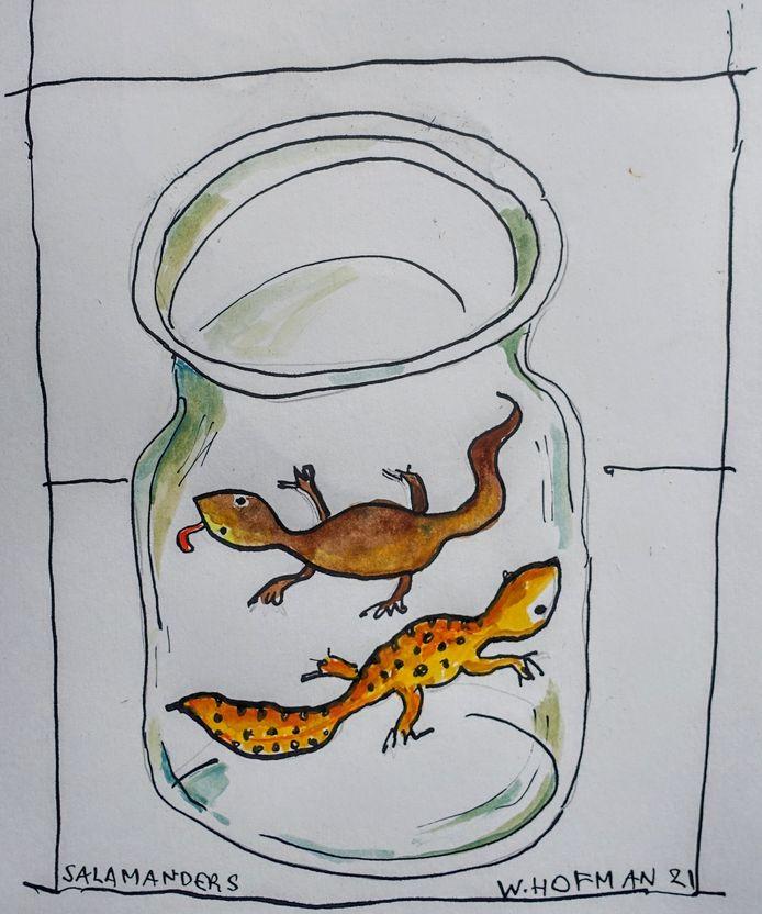 Salamanders.