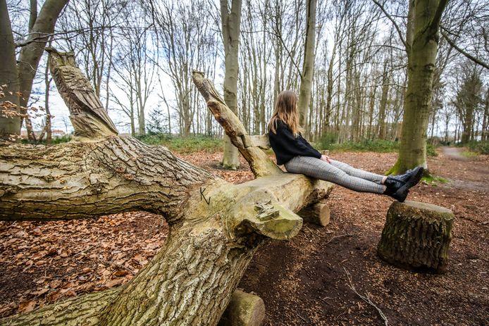 Rustig verpozen op één van de boomstammen is voortaan mogelijk voor patiënten van AZ Sint-Lucas.