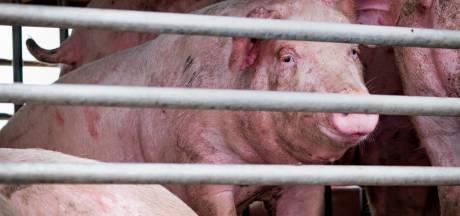 Drie veehouders stoppen werkzaamheden in Hulsel en Hooge Mierde