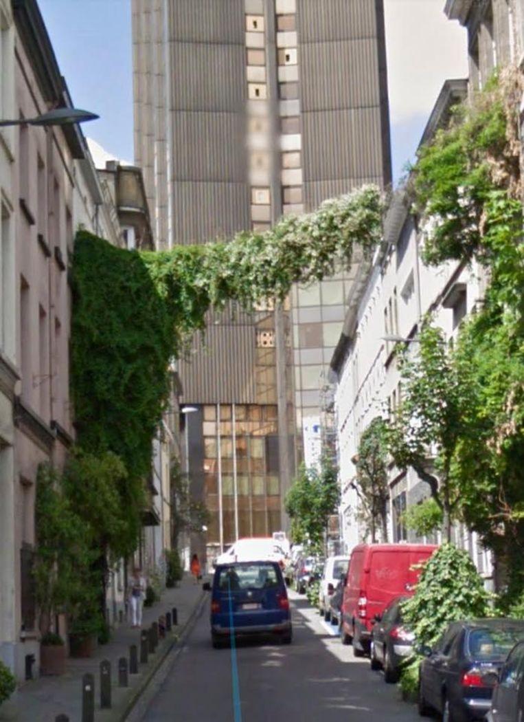 De stad ruimde vorige week de klimplant op.