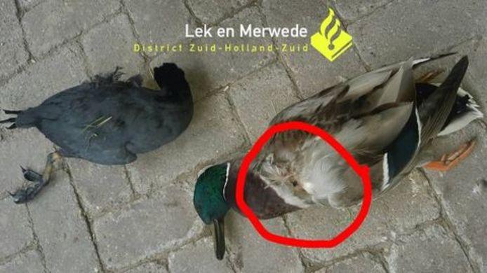 De vogels in Bleskensgraaf werden gedood met een luchtbuks.