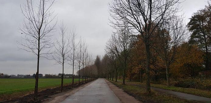 De Poeldijkstraat tussen Zelzate en Assenede.