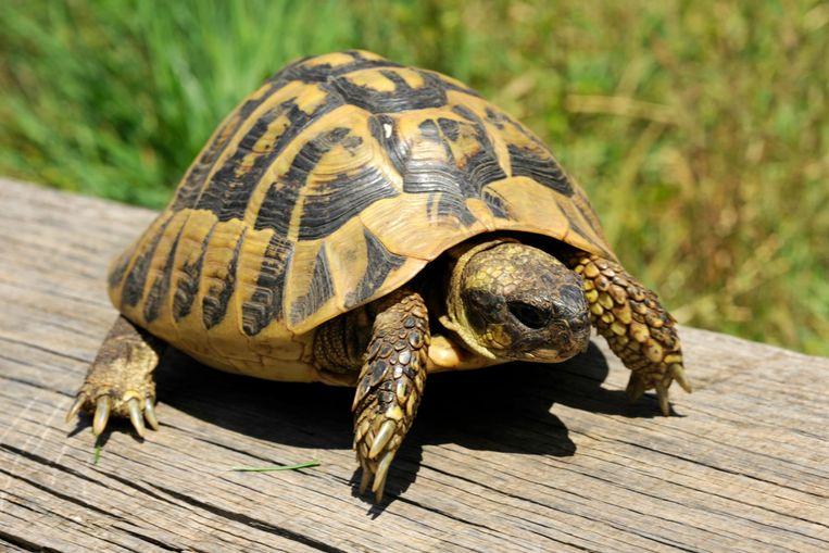 Meer Dan 50 Beschermde Schildpadden Gestolen In Dierenpark Corsica