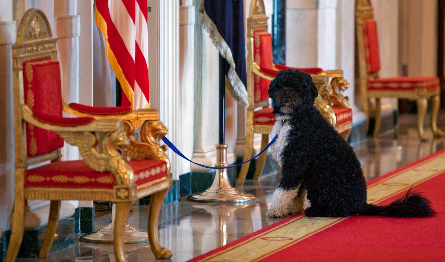 Bo vastgebonden in de Cross Hall, de brede gang op de eerste verdieping van het Witte Huis voorafgaand aan een evenement van de first lady voor kinderen van medewerkers.