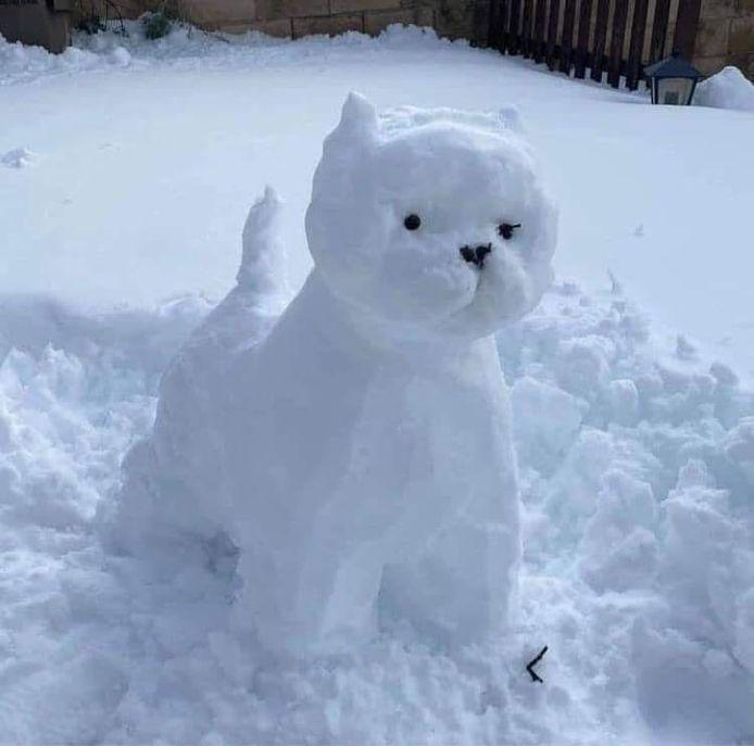 Een sneeuwwit hondje.