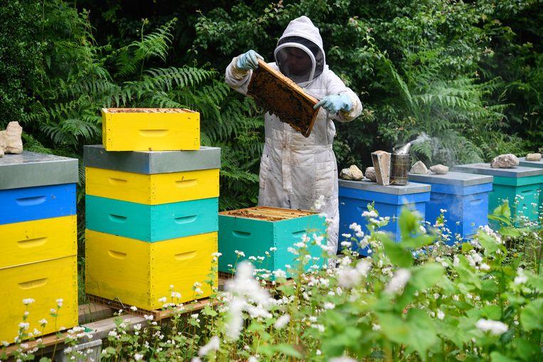 Bijenvolken sterven massaal  Beeld Hollandse Hoogte / AFP