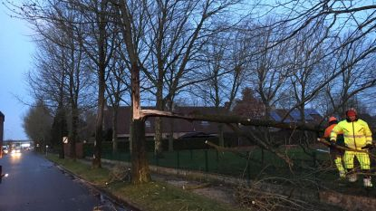 Leerlingen geëvacueerd omdat boom dreigt om te vallen op klas