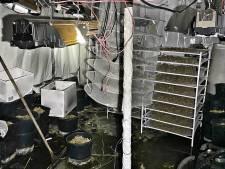 Ondergrondse hennepkwekerij gevonden in Uden