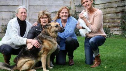 Ex-vrijwilligers die Brugs dierenasiel onder vuur namen moeten niet naar de rechtbank