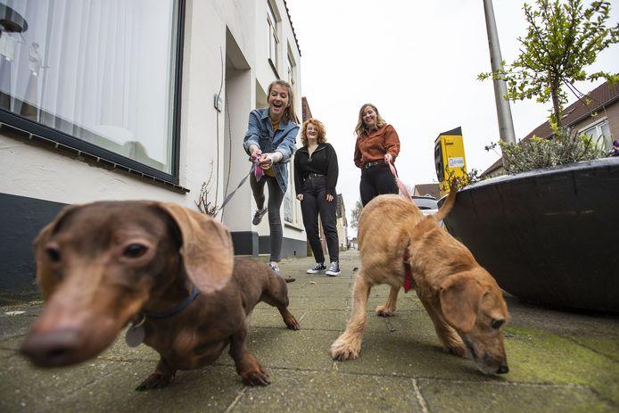In zes gemeenten in de regio hoeven hondenbezitters geen hondenbelasting af te dragen.
