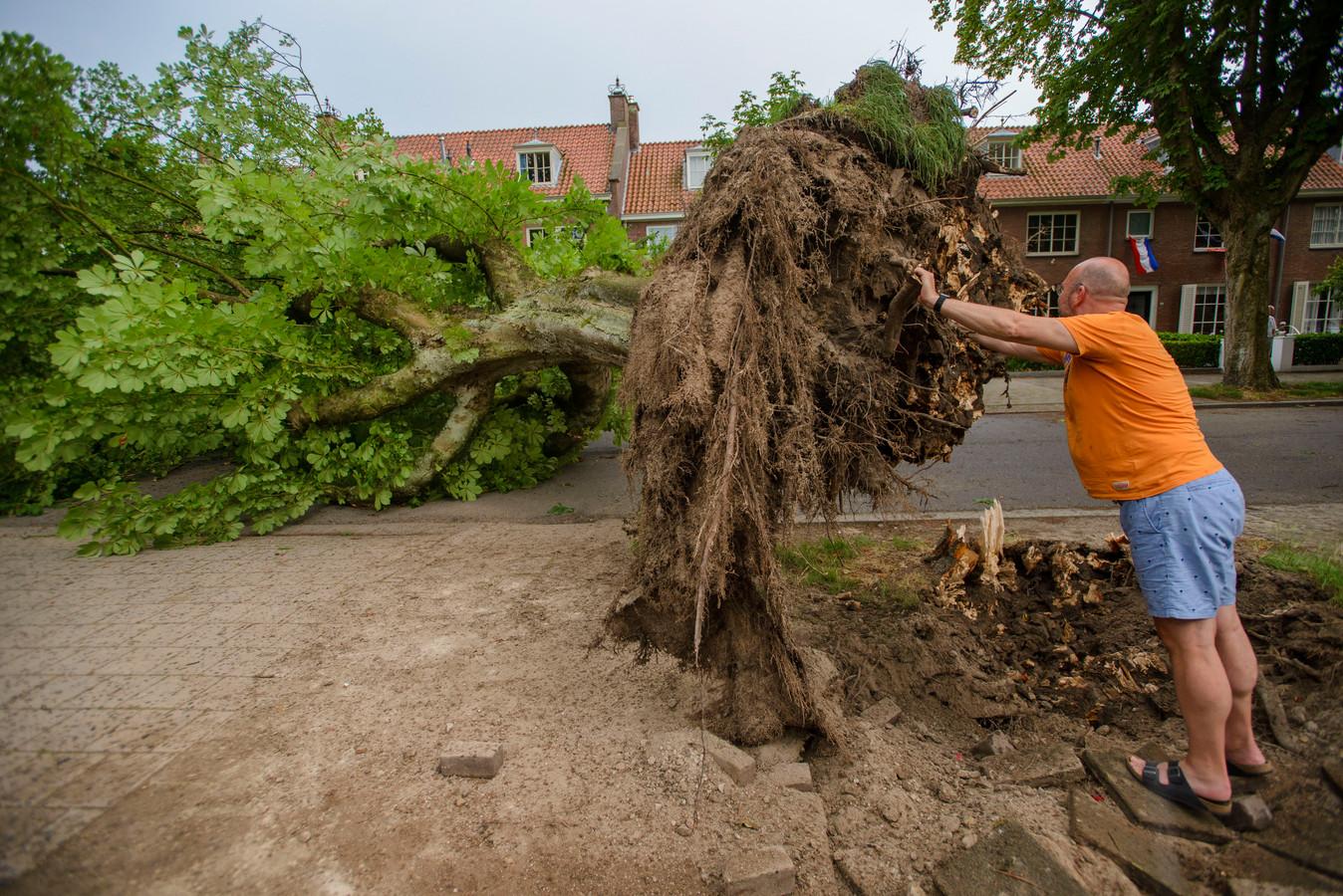 Een omgevallen boom die uit de grond is getrokken en met één stukje wortel nog omhoog steekt, verspert de hele Burgemeester Suijsstraat in Tilburg.