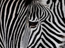 Hagenaar verduisterde volgens OM opgezette wilde dieren, forse boete geëist