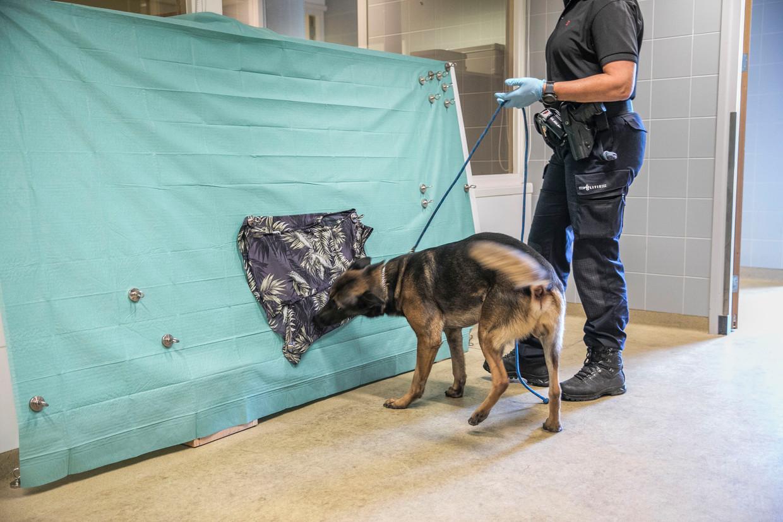 Drugshonden leren blaffen of een ander signaal te geven als ze de geur van drugs herkennen. Beeld Amaury Miller