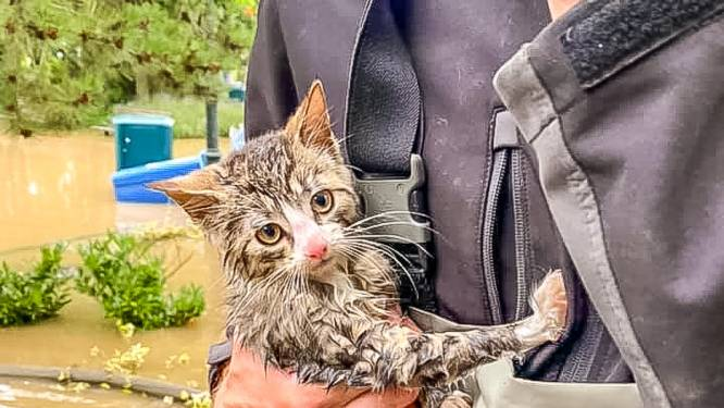 Walibi-medewerkers redden drie kittens van verdrinkingsdood en geven hen een nieuwe warme thuis