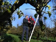 Uniek onderzoek bij fruitteler in Wijk bij Duurstede: worden appels en peren in de toekomst zo geteeld?