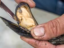 Une année record pour les moules de Zélande