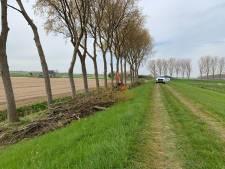 Rust voor broedende vogels in Sommelsdijk niet langer verstoord: snoeiwerkzaamheden stilgelegd