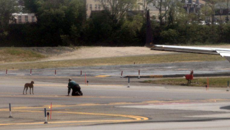 Een luchthavenemployé probeert Byrdie te vangen op de luchthaven LaGuardia in New York. Beeld getty