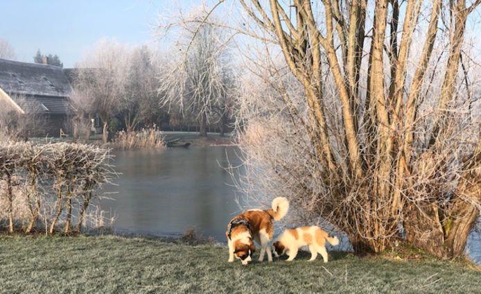 Bij de Wiel in Boven-Leeuwen spotte Ina Koenders dit mooie winterse tafereel.
