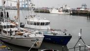Transmigranten proberen haven via havengeul binnen te zwemmen: parket vordert 6 maanden cel