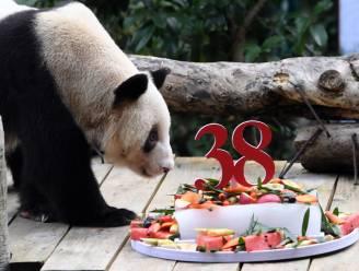Oudste panda in gevangenschap overleden in China