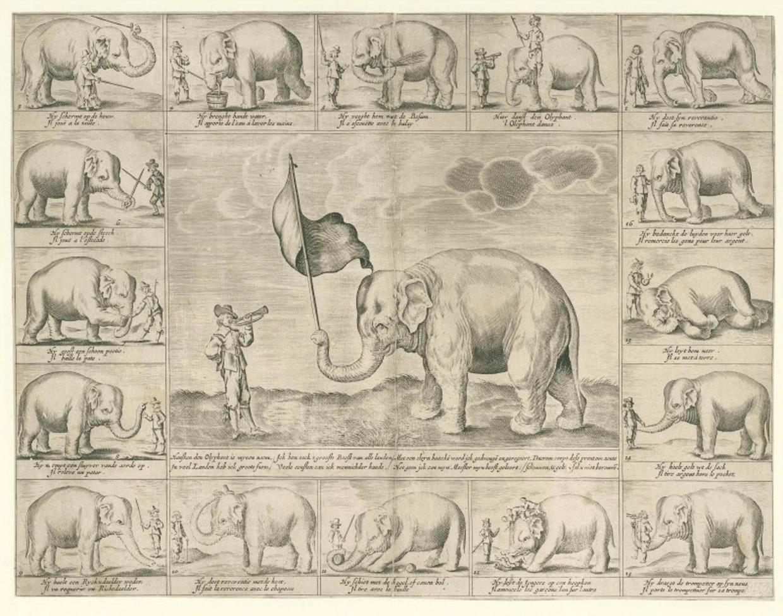 Een anonieme gravure van olifant Hansken. Beeld Collectie Rijksmuseum