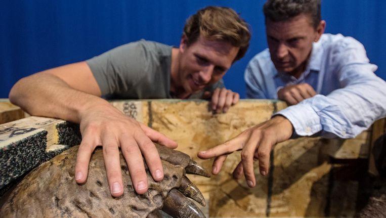 Bioloog Freek Vonk (L) en directeur Edwin van Huis van Naturalis bekijken de schedel van een Tyrannosaurus Rex. Beeld null