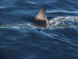 """Meisje (13) overleeft aanval: """"Wauw, ik ben gebeten door een haai"""""""