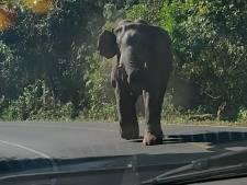 Grosse frayeur pour une famille chargée par un éléphant