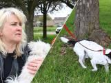 Buurt geschokt na vondst afgehakte hondenpootjes: 'Het is luguber'