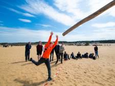 Boomstammen werpen op het zand van de Hoge Veluwe