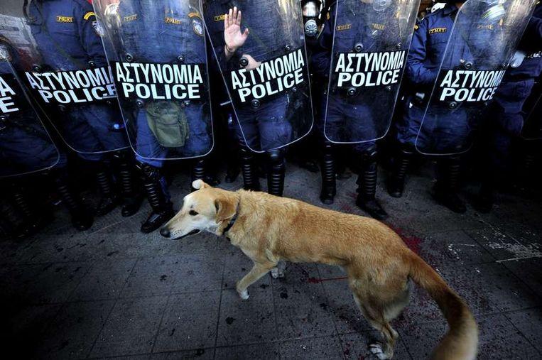 Loukanikos bij de oproerpolitie op 8 december 2010. © AFP Beeld