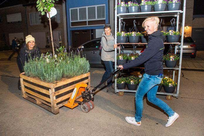 Bijenkoningin Frances en haar 'werkers' toverden de Aalsterse Biekorfstraat met plantjes en fruitbomen om tot meest bijvriendelijke plek van het land.
