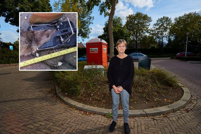 José Verbeek uit Zutphen is de rattenoverlast in haar wijk spuugzat en klaagde daarover langdurig bij gemeente en woonbedrijf Ieder1. Die komen nu eindelijk in actie.