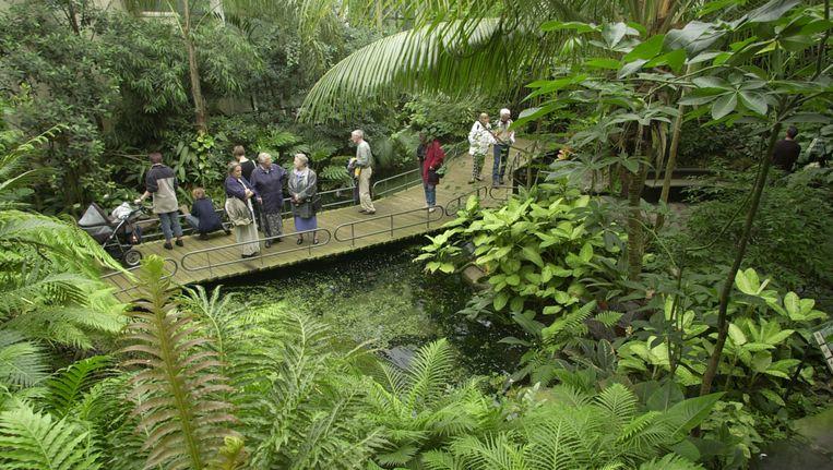AmeriCasa, het overdekte Zuid-Amerikaans tropisch regenwoud van Dierenpark Emmen. Beeld ADN Beeldredactie