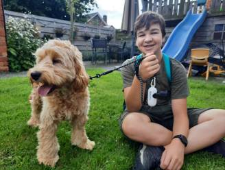 """Robrecht (15) gaat met uw hond wandelen voor een habbekrats: """"Ik doe het vooral omdat ik zo van honden hou"""""""