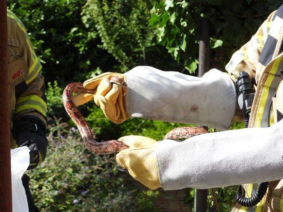 De slang werd gevonden langs Verbrand Nieuwland
