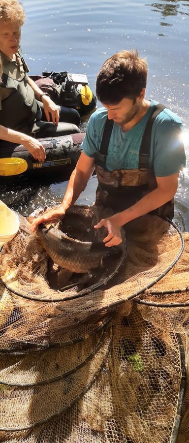 Vrijwilligers inventariseerden zondagvoormiddag de vissen van het Grote Bassin in Roeselare naar aanleiding van de 1.000-soortendag.
