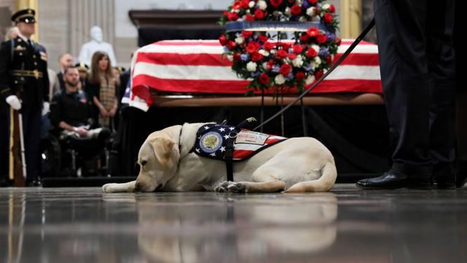 Hulphond Sully neemt afscheid van overleden baasje George H.W. Bush