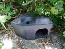 Rattenoverlast in Dommelbergen: 'Voedsel trekt ongedierte aan'
