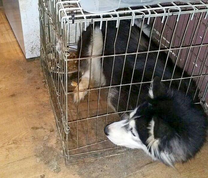 Een van de verwaarloosde honden in een woning in Roosendaal