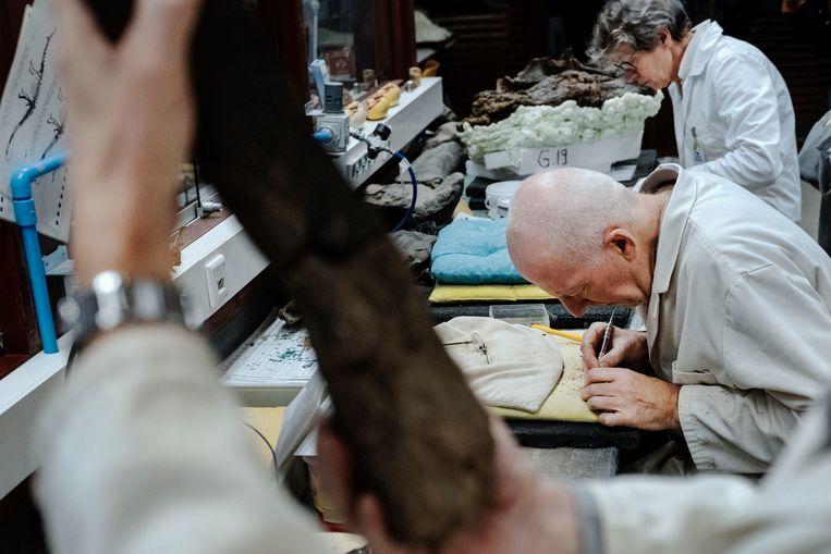 Werken aan de preparatie van dino's en fossielen in het Oertijdmuseum in Boxtel. Beeld Merlin Daleman